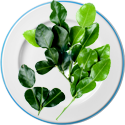 Kaffir lime leaves